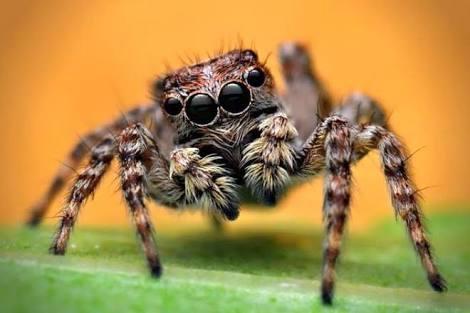 Örümcekler Ne Kadar Besin Tüketir