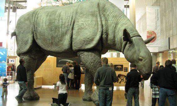 Paraceratherium: En Büyük Kara Memelisini
