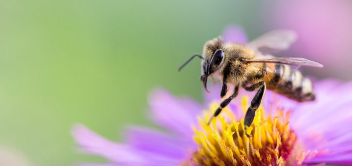 Bal Arıları Hakkında Gerçekler