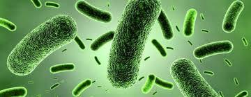 Bakteriler; Nedir, Keşfi ve Tarihi