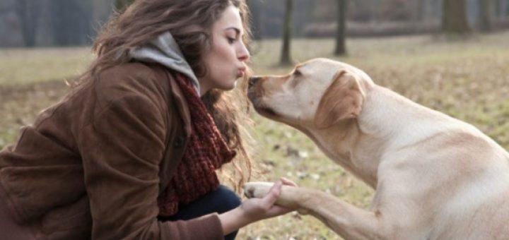 Köpekler Hakkında Bilmedikleriniz