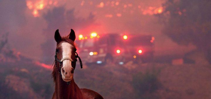 Kaliforniya'da Yıkıcı Yangının Fotoğrafları