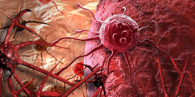Hücre Ölüm Tipleri – Hücre Döngüsü