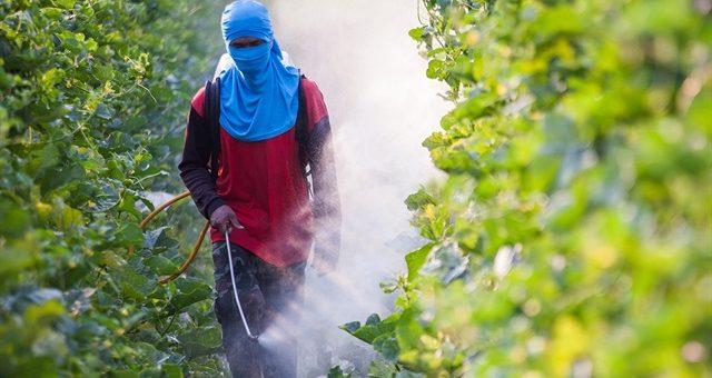 INDOXACARB ve BENDİOCARB Pestisitleri