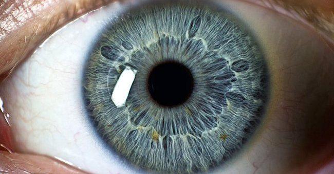 Göz Nedir? Yapısı, İşlevi ve Hastalıkları