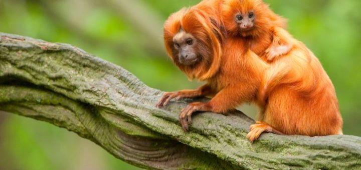 Amazon Yağmur Ormanlarında Yaşayan Hayvanlar