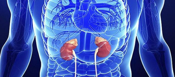 Böbrek Üstü (adrenal) Bezler: İşlevi ve Hastalıkları
