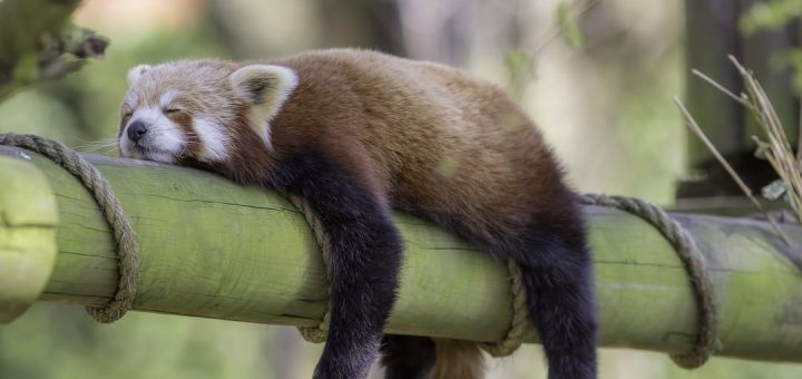 Uyumayan Hayvan Var mıdır?