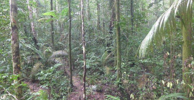 Yağmur Ormanları Nedir? Nerede Bulunur?