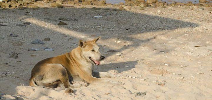 Dünya'da Kaç Köpek Var?