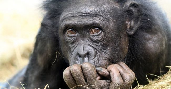 Maymunlar Neden İnsanlar Kadar Gelişmedi?