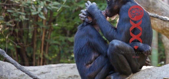 Hayvanlarda Eşcinsellik Örnekleri